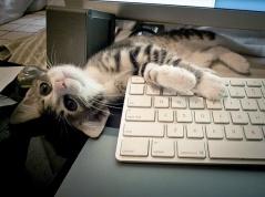 dreamy-writer-kitten